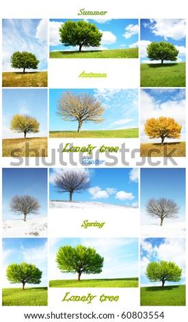 alone tree in for season minimum size photos 2225x3198 - stock photo