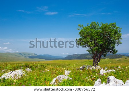 alone tree in green field - stock photo