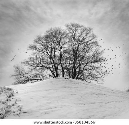 Alone tree in snow hill and birds