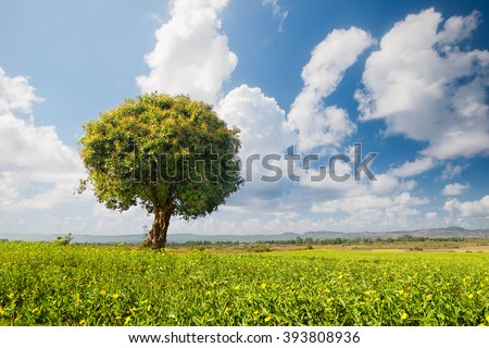 Alone tree on green meadow and clouds on blue sky - stock photo