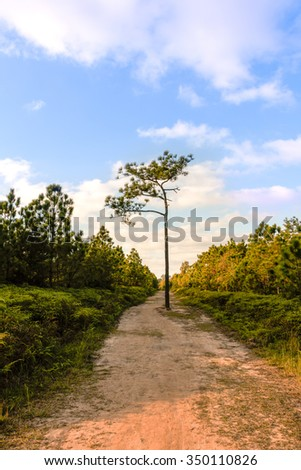 Alone tree on middle nature way - stock photo