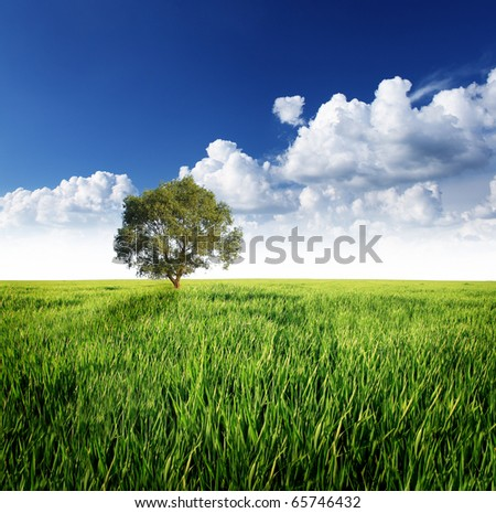Alone tree on the green meadow under cloudy sky - stock photo