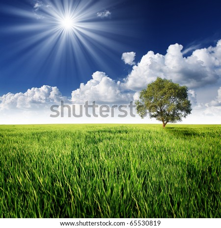 Alone tree on the green meadow under clowdy sky - stock photo