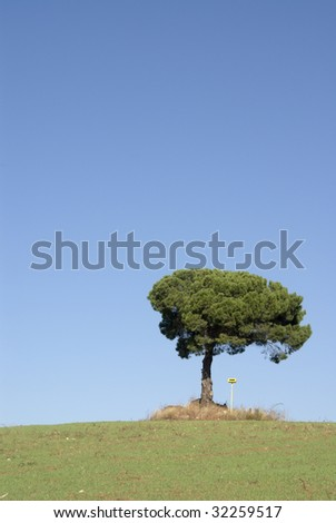 alone tree on the meadow with a blue sky