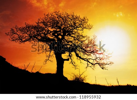 Alone tree with sun and color red orange yellow sky - stock photo