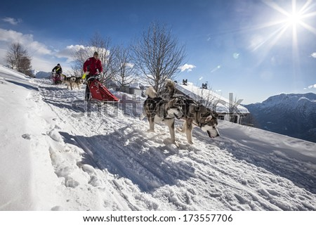 Alpe Giumello  ( Italy ) 01/26/2014: i the Italian alps on the last week end of january there was the 10th meeting of the Alaskan Malamue breed where people from allover Europe come to show their dog - stock photo