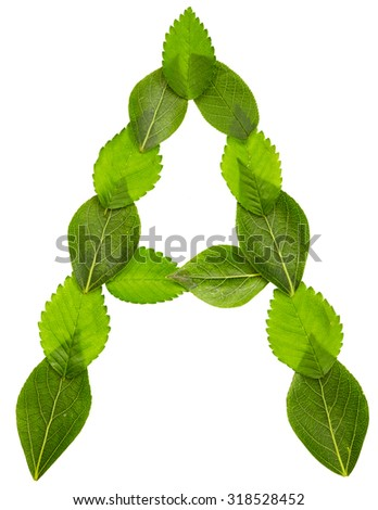 Alphabet from green leaves isolated on white background. Letter A - stock photo