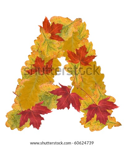 Alphabet of autumn leaves . Letter A