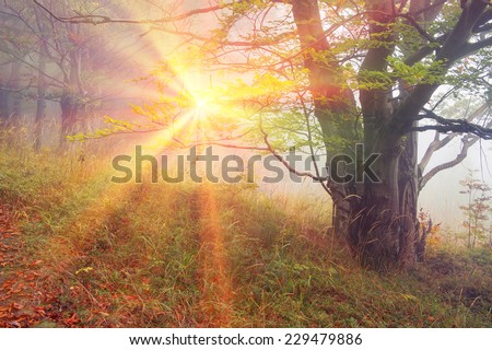 Alpine autumn, scenic sunrise in the beautiful Carpathian forest after rain shining colors and the freshness and coolness of the morning - will clear the new day and good weather after the storm - stock photo