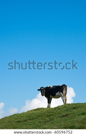 Alpine cow - stock photo
