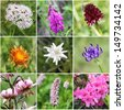 Alpine flora collage (from top left:Valeriana montana, Alpine Sweetvetch, Black Vanilla Orchid, Golden Hawksbeard, Edelweiss, round-headed rampion, Turk's cap lily, common bistort, Alpenrose) - stock photo
