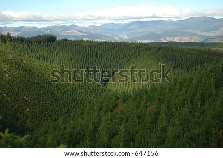 alpine forest - stock photo