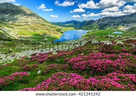 Alpine glacier lake,high mountains and stunning pink rhododendron flowers,Retezat National Park,Carpathians,Romania,Europe - stock photo