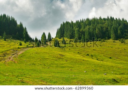 Alpine green plateau with fir tree forest - stock photo