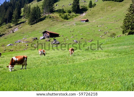 alpine landscape with cows, house and green grass - stock photo