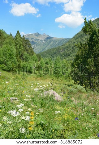 Alpine meadow covered with forest and flowers - stock photo