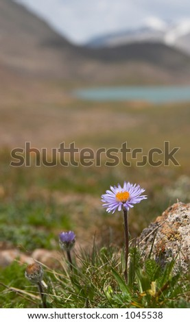 Alpine  meadow in the morning - stock photo