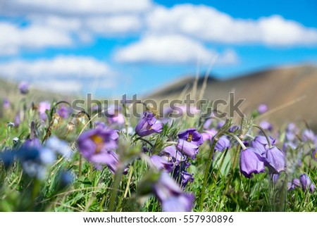 Alpine meadow summer day. Blue sky and clouds