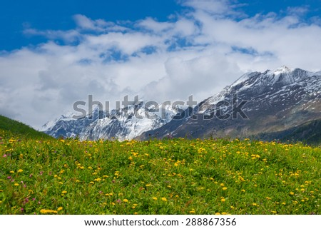 Alpine meadow with yellow flowers and green grass with Alp Mountains on the background - stock photo