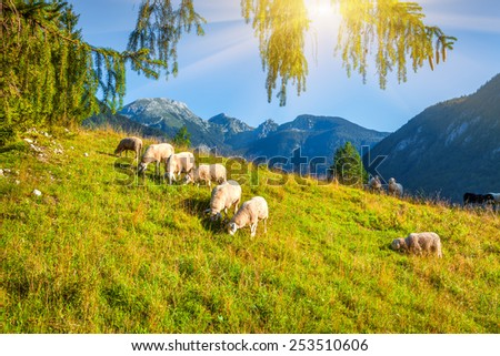 Alpine pastures in the Slovenian. Julian Alps. Triglav National Park. - stock photo