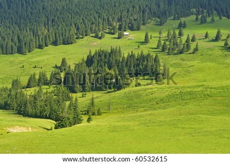 Alpine plateau with crude green grass and fir trees - stock photo