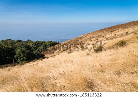 Alpine savanna grassland of Doi Inthanon, Chiang Mai, Thailand - stock photo
