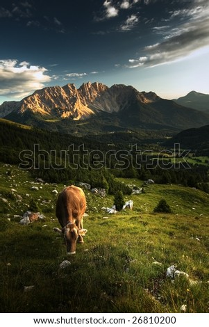 Alpine scenery with grazing cows and dramatic sky. - stock photo