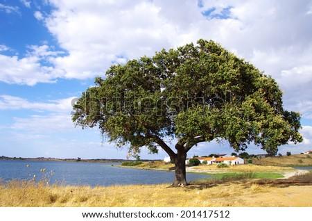 Alqueva barrage with solitary tree.  - stock photo