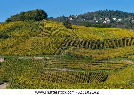 Alsace Vineyards, in autumn, France, Europe