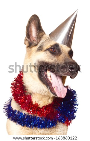 Alsatian dog ready to celebrate the New Year. Isolated on white.  - stock photo