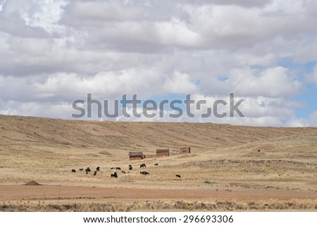 ALTIPLANO, BOLIVIA - SEPTEMBER 3, 2010: Altiplano is a vast plateau in the Andes mountains.On the Altiplano plateau of cultivated land  is one of subsistence agriculture, growing potatoes.
