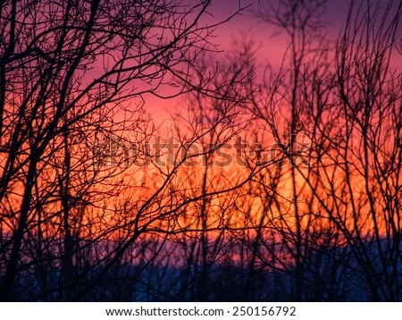 Amazing arctic winter sunset sky through the tree twigs silhouettes - nature background - stock photo