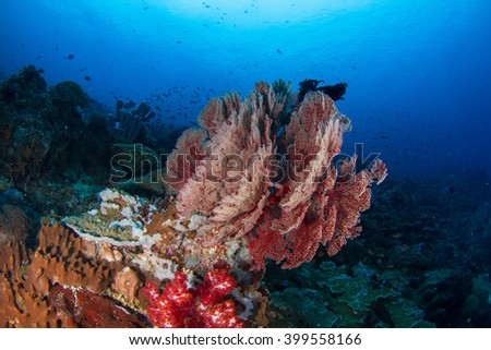 Amazing beauty of the sea fan. Red soft corals in shallow water, healthy reef in Indonesia. - stock photo
