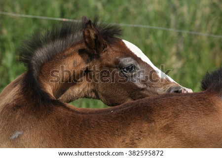 Amazing brown foal alone on pasturage - stock photo