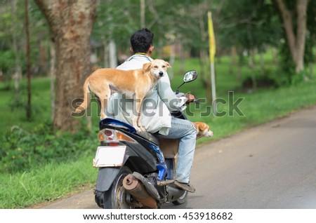 amazing dog stand on motocycle - stock photo
