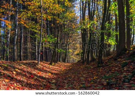 Amazing Fall Forrest. Lovely Nature Picture of an European Forest in Bavaria, Germany