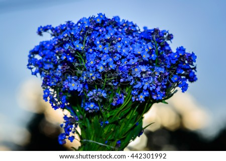 Amazing Forget-me-not flower - stock photo