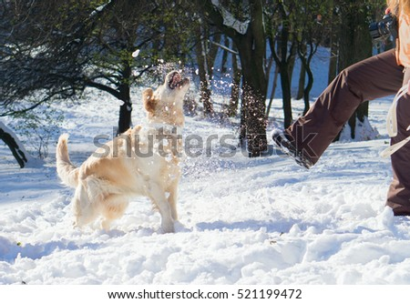 Amazing golden retriever dog jumping , playing snowballs with woman. Winter in park. Horizontal, action moment.