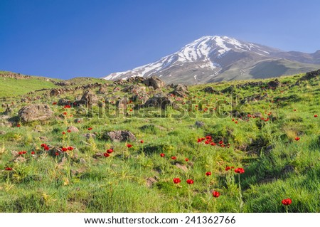 Amazing green meadow with red poppies and volcano Damavand in the background, highest peak in Iran - stock photo