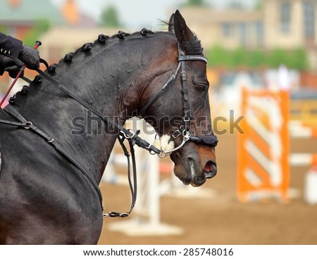 Amazing horse head with Hackamore bridle on sports arena background - stock photo