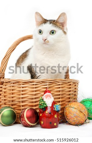 Amazing lady-cat sitting in the wicker basket among the Christmas candle and toys
