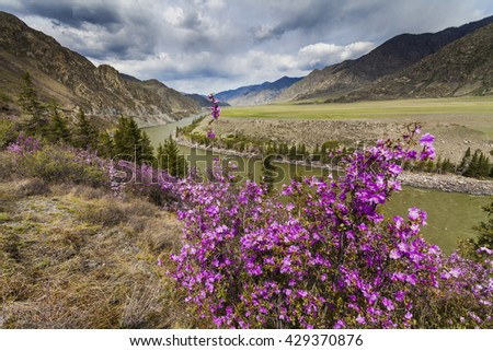 Amazing landscape with mountains, river and blooming rhododendron.