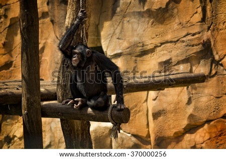 Amazing monkey photo with great details - stock photo
