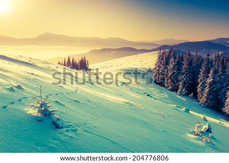 Amazing mountains in the morning sunlight. National Park. Carpathian, Ukraine, Europe. Beauty world. Retro filtered. Toning effect.  Happy New Year! - stock photo