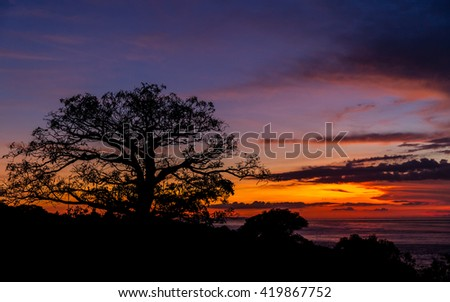 Amazing ocean sunset with silhouette big tree / Indonesia, Bali