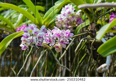 Amazing orchid flowers in the botanic garden - stock photo