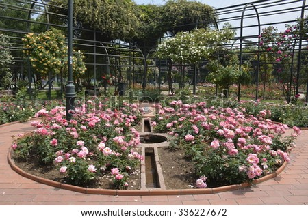 Amazing roses and  garden at a park in Santiago, Chile
