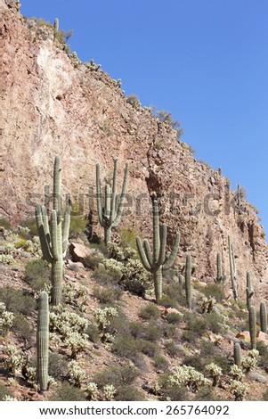 Amazing saguaro cactus in Sonoran Desert, Arizona, USA - stock photo