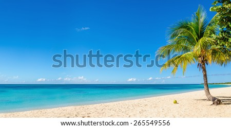 Amazing sandy beach with coconut palm tree and blue sky, Cuba, Caribbean Islands - stock photo