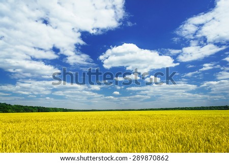 Amazing summer landscape with cereals field and funny clouds. - stock photo
